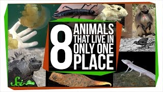 8 Animals That Only Live in One Place
