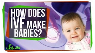 How Does IVF Make Babies?