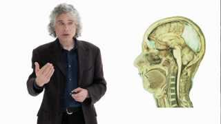 Steven Pinker: Linguistics as a Window to Understanding the Brain