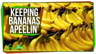 Keeping Bananas Apeelin'