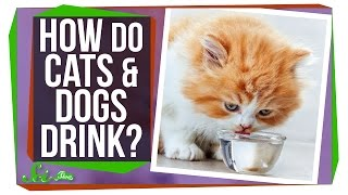 How Do Cats and Dogs Drink Water?