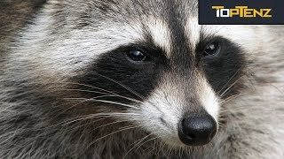 Top 10 SPECIES That Would DOMINATE if Humans DIED OUT