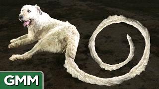 World's Longest Dog Tail