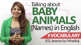 Learn English - Baby Animals names ( Beginner English Lesson)