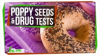 Can Poppy Seeds Make You Fail a Drug Test?