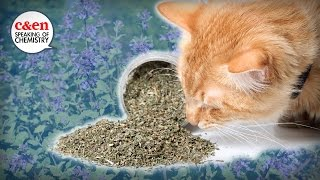 What is catnip, really?