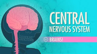 Central Nervous System: Crash Course A&P #11