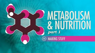 Metabolism & Nutrition, part 1: Crash Course A&P #36