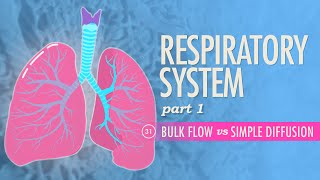 Respiratory System, part 1: Crash Course A&P #31