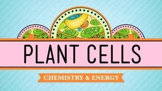 Plant Cells: Crash Course Biology #6