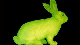 Glow In The Dark Rabbit? -- Mind Blow #70