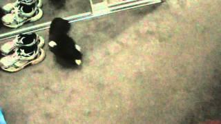 How To Throw a Teddie Bear