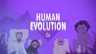 Human Evolution: Crash Course Big History #6