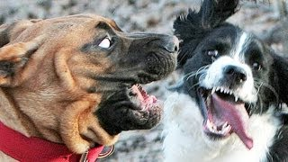 SCARIEST DOGS and MORE! IMG! #48