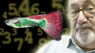 Can Fish Count? - Numberphile
