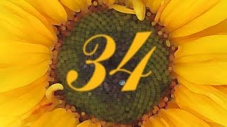 Problematic Sunflower - Numberphile