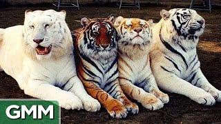 Bizarre Animal Hybrids (GAME)