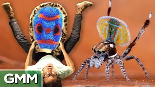 Exotic Animal Dance Off