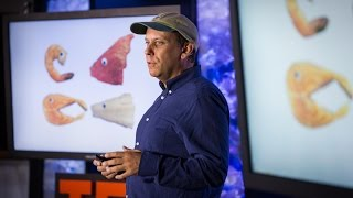 The Four Fish We're Overeating — and What to Eat Instead | Paul Greenberg | TED Talks