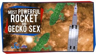 The Most Powerful Rocket Ever, and Gecko Sex in Space