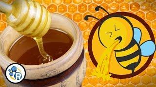 Honey is Really Bee Puke