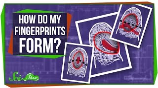How Do My Fingerprints Form?