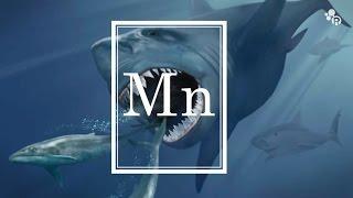 Do Mega Sharks Still Exist? (featuring Sam Kean) - Reactions