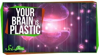 Your Brain is Plastic