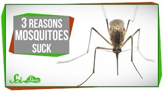 3 Reasons Mosquitoes Suck