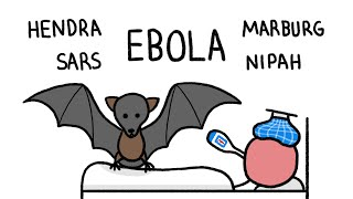 Why do Bats Transmit so many Diseases like Ebola?