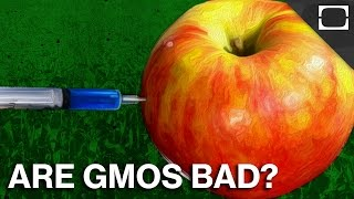 Are GMOs As Scary As They Seem?